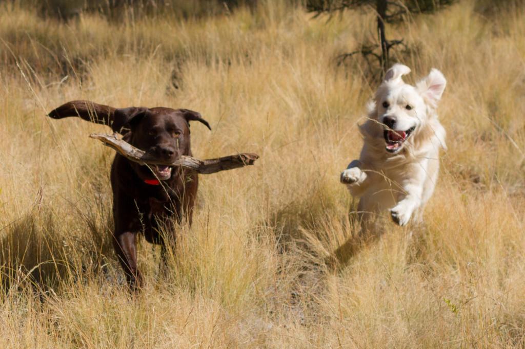 Play day in Flagstaff, Az
