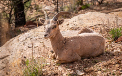 Easter Sunday in Zion with some of the locals…